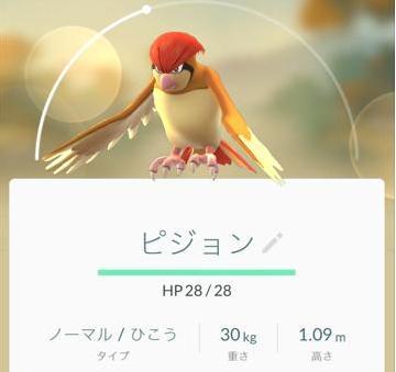 【ポケモンGO】ポッポを進化させてレベル上げ!