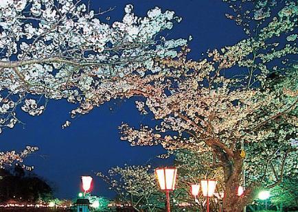 千葉県・茂原公園のお花見2017|見ごろ時期・混雑状況・駐車場等